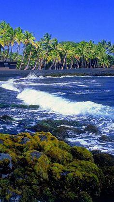 punaluu black sand beach - great place to watch sea turtles