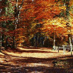Spaziergänge mit raschelnden Blätter unter den Füßen und einer kühlen Brise um die Ohren