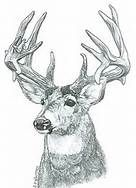 Free Wood Burning Patterns Wildlife