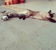 São amigas até na preguiça de domingo! ♥ ( Biriba e Cheetah)
