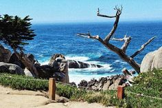 PEBBLE BEACH - CA - USA . . Just some old dead looking tree that asked me to take its photo . #pebblebeach #california #usa #sun #summer #holiday #travelling #travel #roadtrip #explore #sightseeing #igdaily #picoftheday #photography #canon #landscape #montereylocals #pebblebeachlocals - posted by Toby https://www.instagram.com/toby_norris - See more of Pebble Beach at http://pebblebeachlocals.com/