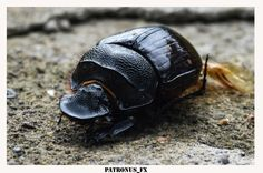 Insect Photography, Insects, Animals, Animales, Animaux, Animal, Animais, Dieren