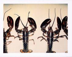 Polaroid by Andy Warhol