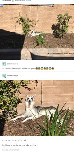 Tell us your dreams mortal - Humour Spot Funny Cute, The Funny, Hilarious, Daily Funny, Animals And Pets, Funny Animals, Cute Animals, Tumblr Funny, Funny Memes