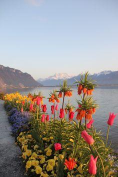 Tropical flower walk around lake Geneva Switzerland   ... : 17 Days in Switzerland and Italy (3) - Montreux, Switzerland