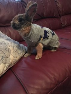 Peanut in her Christmas jumper