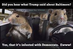 """""""Well the four legged rats are leaving Baltimore! Dixon Diaz, Trump Is My President, Political Cartoons, Special Guest, Four Legged, Baltimore, I Laughed, Politics, Shit Happens"""