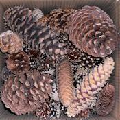 Assorted Box of Pine Cones  - More ideas from DriedDecor.com