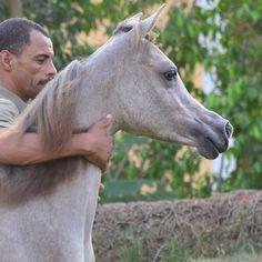 Sabaeek alkharafi by jasser alrayyan