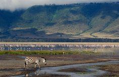 21-Ngorongoro Área de Conservação - Região de Arusha, Tanzânia