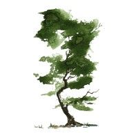 water color watercolor nature tree trees green