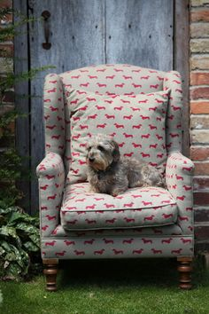Red Dachshund fabric by Emily Bond with Wire Haired Dachshund!  Lovely!