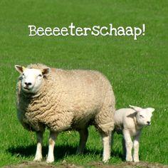 Fotokaart Schaap met lammetje in gras - Beterschapskaarten - Kaartje2go