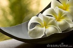 White spa flower in a brown bowl with blur background in Thailand