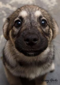 Sunday's Aww: The Star Of The Photoshoot!