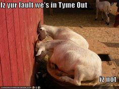 naughty goats