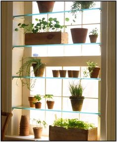 Glass Window Shelves For Plants Ideas