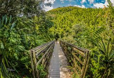 Bamboo Forest Gateway    Walking Bridge giving access to the 40-50 ft tall bamboo winding its' way to the Waimoku Falls. at the top of Oheo Gulch (also know as the 7 Sacred Pools).      Equipment: Manfotto Tripod, Canon 6D, Canon EF 8-15mm f/4L FIS, 1/60 f/5.0, ISO 100, 15mm    Professionally printed on archival paper that has a standard value of 100 years in home display; 200 years in dark storage.    All photos listed in this store have been personally taken and post processed by me. All…