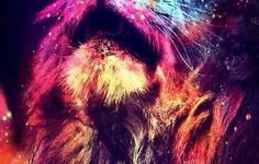 Iphone Wallpaper Tumblr Abstract Lion