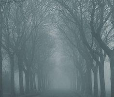 A FOGGY TREE LINED STREET: