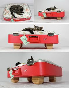 suitcase kitty bed.  I have a couple of vintage samsonite suitcases.  sure they work for the short term but I should figure out something else soon.   Wouldnt want them just thrown away when they fall apart.