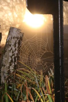 The Intricacy and Beauty of Spider Webs                                                                                                                                                                                 More