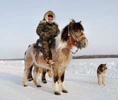 Yakut horse. A rare native horse breed from the Siberian Sakha Republic (or Yakutia) region.