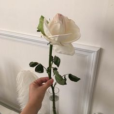 Imagen de rose, white, and flowers Casual Summer Outfits For Women, Summer Dress Outfits, Aesthetic Roses, White Aesthetic, Book Aesthetic, Icon Girl, Feeds Instagram, Style Instagram, Instagram Ideas