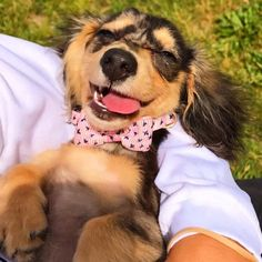 That feeling when the weekend has finally arrived and bae holds you like this  IG @dachshunds_in_the_d #sausagedoglove