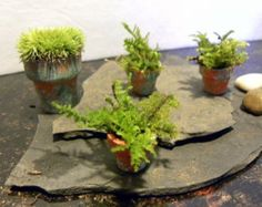 Items I Love By G L On Etsy Fairy Garden Pots Moss Gardens