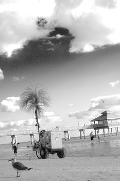 The ice cream man on Fort Myers Beach, Lee County, Florida ~s~3