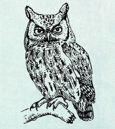 printable owl coloring page  coloring pages owl birds  owl  free printable coloring page