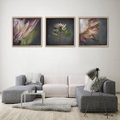 King on Gray - prints by Natascha van Niekerk Fine Art Photography Framed Canvas Prints, Wall Art Prints, Canvas Art, Living Room Decor Inspiration, Art Prints For Home, Square Art, Botanical Wall Art, Living Room Pictures, Floral Illustrations