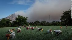 This picture taken June 19, 2015 shows local farmers working in their fields as Mt. Sinabung spews smoke.