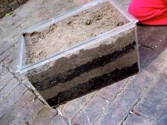 Blaadjes opruimers (wormenbak) Vul een doorzichtige bak met een laagje aarde…