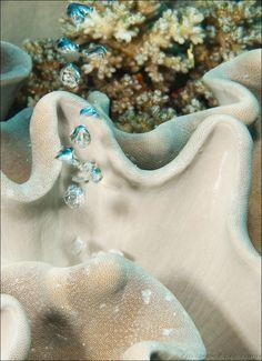 Air bubbles through sponge, Fiji Islands by Colin Gans