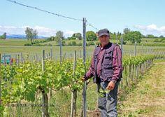 Vineyard worker, Baden-Württemberg