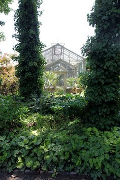 A Side Entrance Of The Greenhouse With A Lush Shade Garden   The Vines  Growing Up