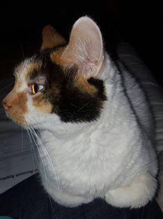 neurological symptoms in cats