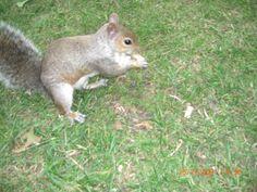 London park, squirrel