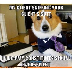 Lawyer Dog: Sniff sniff