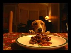 The sneaky Beagle -- Westminster  If you love beagles, watch this. Too funny.