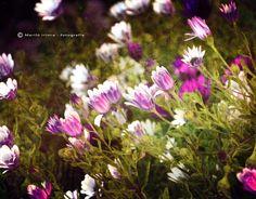 Flowers   by Mariló Irimia