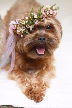 Puppy bride in a pink flower crown for her wedding day.
