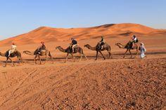 Fotografía: Sandra Poza- Desierto Camel, Portugal, Animals, Wilderness, Morocco, Places To Visit, Animais, Animales, Animaux