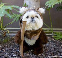 Halloween dog costume - Star Wars' Ewok