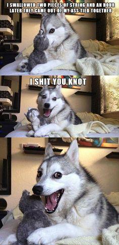 Hahahahaha....love this dog!