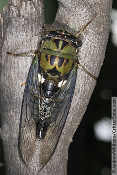 For some reason cicada's buzzing in the trees makes me feel at peace.