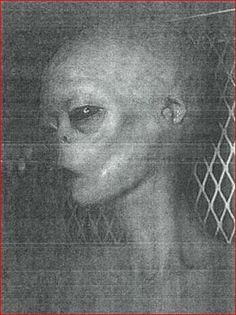 """""""THE ABOVE IMAGE IS A PHOTO OF J-ROD THE INSECTOID WHO IS IN SOME KIND OF SPHERE AT AREA 51......J-ROD*******BURISCH ON COASTOCOASTAM.COM APRIL 23 24 O4...."""" #alien #aliens #ufos #paranormal"""