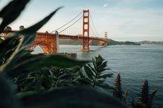 Home | See Nic Wander Teaching English Online, House Sitting, Golden Gate Bridge, Wander, San Francisco, Road Trip, Wellness, Explore, Adventure